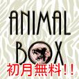 【お試し無料】【今すぐコインGET】Animal Box